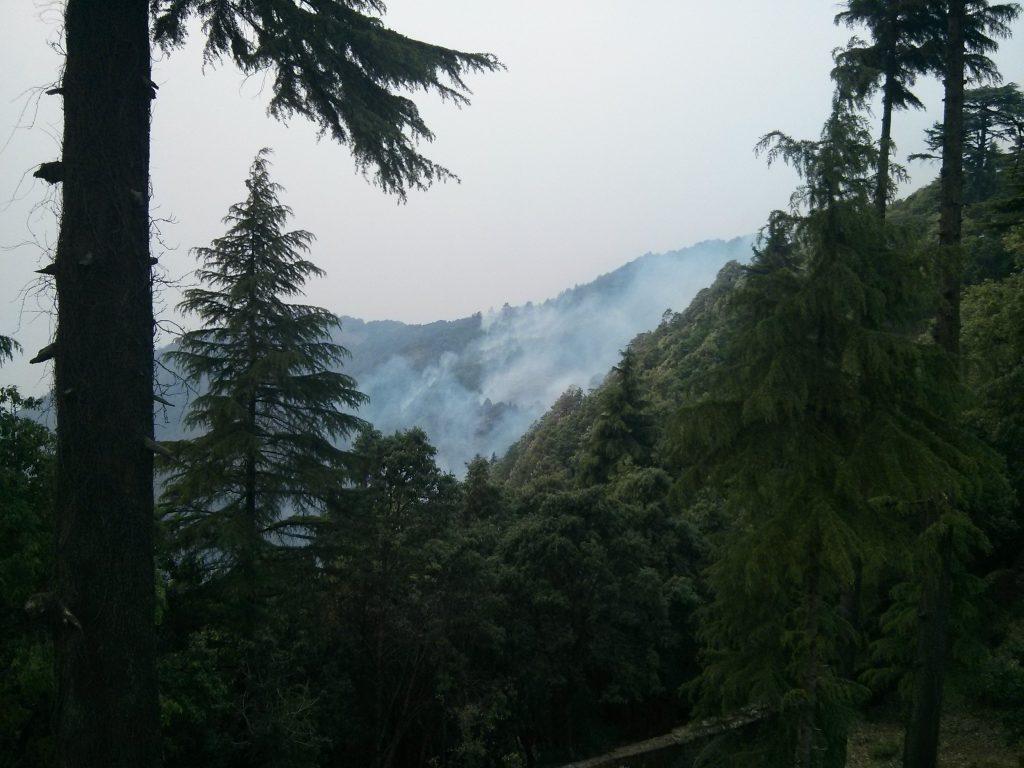 Metsäpalo kävi hyvinkin lähellä. Osa paloista oli hallittuja, joiden tarkoitus oli estää hallitsemattomia paloja leviämästä.